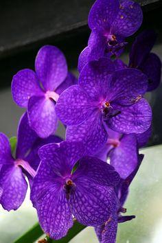 wife sharing orchidee frankfurt