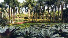 Os jardins de Burle Marx, no Inhotim, em Brumadinho, Minas Gerais.