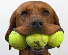 tennis #dog