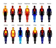 Body heat map shows how we feel different emotions Shiatsu, Heat Map, Different Emotions, Les Sentiments, Human Emotions, Body Love, Health Facts, Health Chart, Holistic Healing