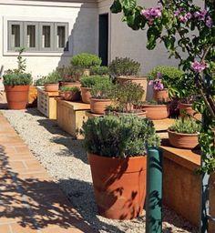 home garden (Photo: Edu Castello and Renato Corradi)
