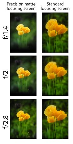 Comparison between a standard focusing screen and precision focusing screen for DSLRs. The standard focusing screen shows the same depth of field at f/1.4 - f/2.8. Whereas the precision focusing screen shows the difference in depth of field between apertures correctly.