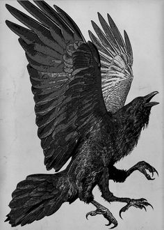 Raven (raven, phoenix, crow) Series. The Three Legged Birds- Sanzuwu, Yatagarasu, and Samjok-o Aquatint -   via Etsy, by Larry Vienneau Jr