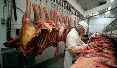 If you are running #meat processing plant #floor then getting yourself up-to-date information on #meat and #poultry processing plants is very beneficial. Visit us today.