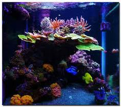 how to aquascape live rock - Google Search