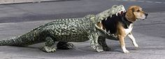 Ação de Guerrilha para promover um Zoologico! http://comunicadores.info/2012/02/17/comida-de-crocodilo/