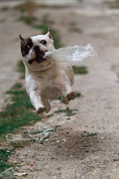 WAHOO!!! I got the bag, I got the bag !!