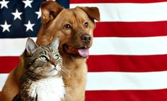 fourth-of-july-pets.png (658×396)