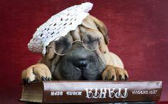Cão Óculos Livro Shar Pei Pata Animais