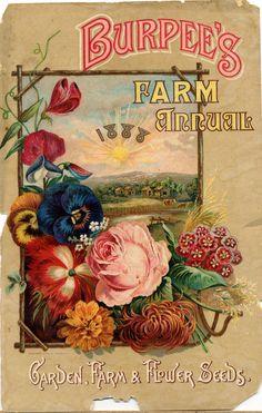 Burpee's seeds, old illustration, flower, floral, flowers, picture, old, poster, illustration, vintage