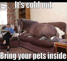 Cold Out Bring Pets Inside
