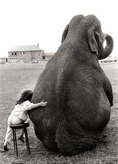 Elephants have been known to help people who are in distress. Now, let's work together to help the elephants.