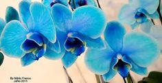Resultado de imagem para Flores naturais azuis