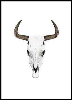 Plakat med flotte bøffelhorn.