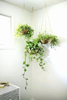 Indoor Garden Ideas - Hang Your Plants From The Ceiling & Walls // Customize your own modern set of hanging planters, perfect for the corner of any space. Wall Hanging Plants Indoor, Diy Hanging Planter, Diy Planters, Indoor Plants, Hang Plants From Ceiling, Garden Planters, Gold Planter, Ceiling Hanging, Planter Ideas