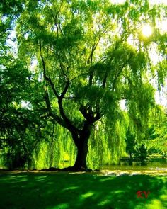 O caráter é como uma árvore e a reputação como sua sombra. A sombra é o que nós pensamos dela; a árvore é a coisa real. (Abraham Lincoln) ***R***