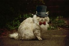 The cutest hipster is a furry hipster! Check out these hip animals, esp love #2!