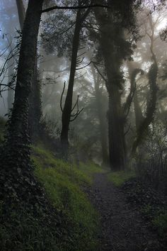 Superb Nature - lori-rocks: Misty Trail in Color (by reecardo-v) Tree Forest, Dark Forest, Forest Path, Misty Forest, Magical Forest, Forest Book, Foggy Forest, Forest Trail, Earth 3