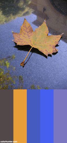Fallen Leaf Color Scheme from colorhunter.com