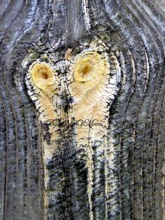 Photograph Owl Tree Face Bark  Burl OOAK Photo 4 by ByLightOfMoon, $5.00
