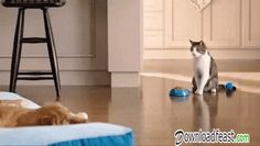 funny #cat and #dog #gifs - combo!