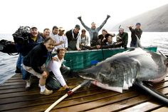 Farallon Islands White Sharks | Yee Hah! We're doing science... high five!!
