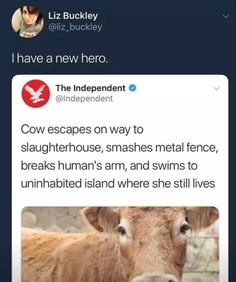 """Metal - Funny memes that """"GET IT"""" and want you to too. Get the latest funniest memes and keep up what is going on in the meme-o-sphere. My Tumblr, Tumblr Funny, Funny Memes, Funniest Memes, Funny Cute, The Funny, Hilarious, Animal Memes, Funny Animals"""