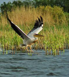 Danube Delta Danube Delta, Poems, Explore, Birds, Nature, Poetry, Bird, Naturaleza, Exploring