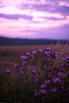 Purple Wildflowers.
