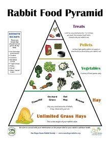 Rabbit food Pyramid More