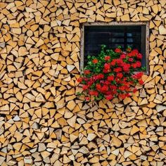 Stocking up for winter!  Firewood covers an entire wall of a house, in a village in the northern Primorska region of Slovenia.  Image by Beno Saradzic.