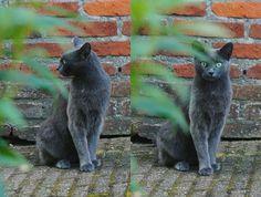 Annerieke: WAAROM IK VAN KATTEN HOUD | WHY I LOVE CATS