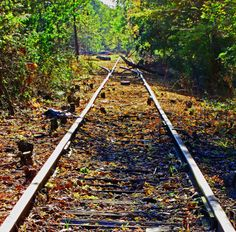 Abandoned Rails In Frenchtown|Love's Photo Album
