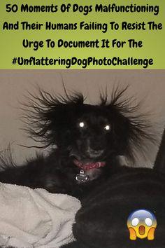 #Moments #Malfunctioning #Humans #Failing #Resist #Urge #Document #Unflattering #Dog #Photo #Challenge