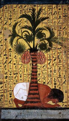 Slave Beneath a Palm Tree Laden With Dates -- 13th Century BCE -- Tomb of Pashedu Deir el Medina, TT 3 -- Reign of Set I-Rameses II.
