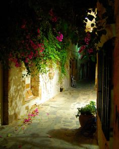Canea, Kriti, Greece night flowers