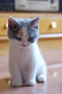 Pin by Enith Gonzalez on Kittens Puppies And Kitties, Cute Cats And Kittens, Baby Cats, I Love Cats, Kittens Cutest, Cute Puppies, Beautiful Kittens, Pretty Cats, Animals Beautiful