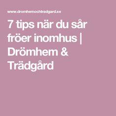 7 tips när du sår fröer inomhus   Drömhem & Trädgård