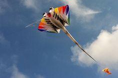 manta  kite   Peter Lynn Manta show kite