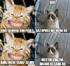 These funniest BC Billi\/Bakchod Billi Memes will truly