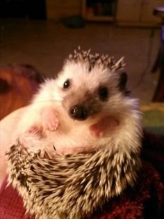 This is my hedgehog bubbles