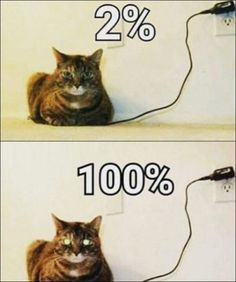My cat is fully charged! Funny Animal Images, Funny Animal Pictures, Cute Funny Animals, Animal Memes, Cute Cats, Quote Pictures, Funny Cat Captions, Funny Cat Memes, Funny Cat Videos
