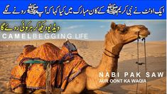 Nabi Pak SAW Aur Oont Ka Waqya ( Our ProphetHazrat Muhammad PBUH & a Camel ) Urdu/Hindi