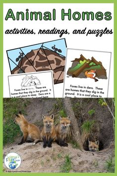 Students will learn about the animal homes of bats, bees, foxes, beavers, birds, hermit crabs, and rabbits. There are colorful mini-posters about the homes of each animal to be read as a class. A follow-up booklet is provided on two levels. There are also puzzles of some other animal homes, follow-up worksheets, and suggestions and tips. #kindergartenscience #2ndgradescience