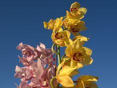 Orchidées - Fond d'ecran et Wallpaper: http://wallpapic.be/nature/orchidees/wallpaper-10208