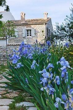 Cabin with iris Beautiful Gardens, Planting Flowers, French Garden, Iris Flowers, Outdoor Plants, Outdoor Gardens, Blue Garden, Garden Planning, Cottage Garden