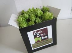 Hops flowers(cones) make a beautiful and interesting botanical addition to your event or special project. These hops flowers are hand selected and