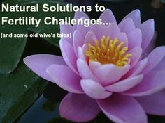 Natural Solutions to Fertility Challenges... and some old wive's tales