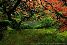 Autumn's Symphony by *La-Vita-a-Bella
