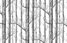 Black White Silver Birch Tree Pattern Wallpaper x 57 Square Feet for Bedroom Living Room Wallpaper Mural TV Background Wall Paper Roll Modern Design Rustic Forest Wood Papel Pintado Décor Tree Wallpaper Modern, Tree Wallpaper Bedroom, Birch Tree Wallpaper, Fern Wallpaper, Print Wallpaper, Textured Wallpaper, Tree Drawing Wallpaper, White Wallpaper, Charcoal Wallpaper